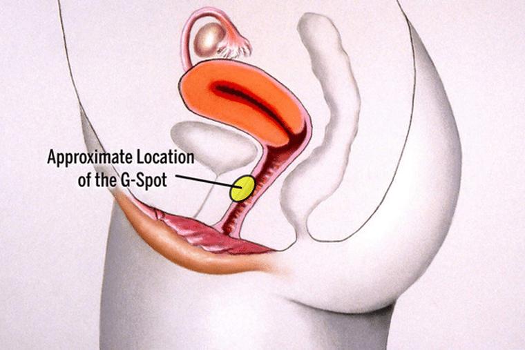 Điểm G nằm ở gần bộ phận sinh dục
