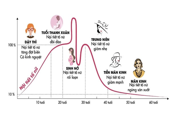 Sự suy giảm nội tiết tố nữ (estrogen) theo thời gian