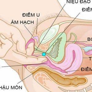 Điểm G của nữ giới rất gần với cơ quan sinh dục