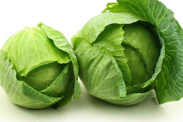 Bắp cải có giá trị dinh dưỡng cao