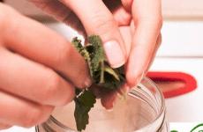 Xé vụn và nghiền lá bạc hà ra sẽ giúp thu được nhiều tinh dầu bạc hà hơn