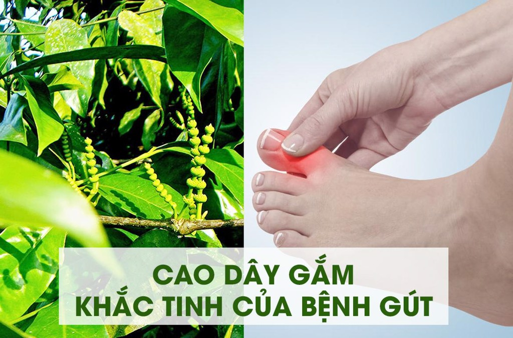 cao dây gắm