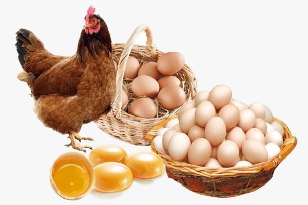 Thịt gà và trứng rất có hại cho bệnh nấm da đầu