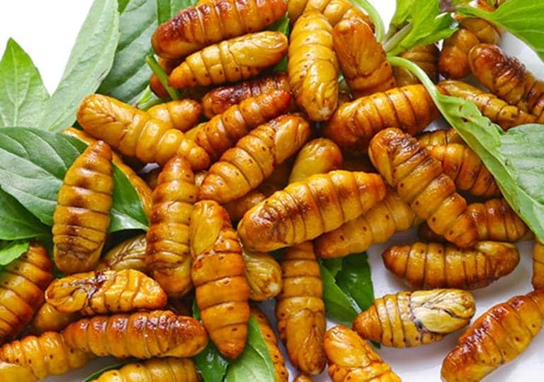Bị tổ đỉa nên kiêng ăn nhộng tằm để tránh bệnh tái phát