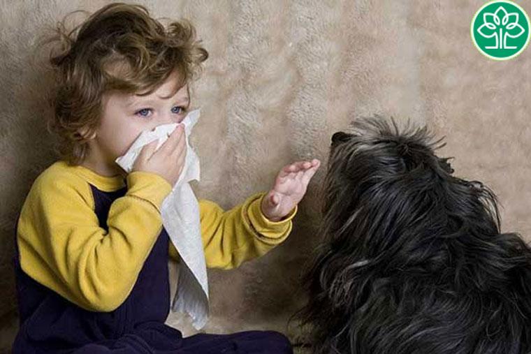 Lông chó mèo là một trong số những nguyên nhân gây kích ứng da