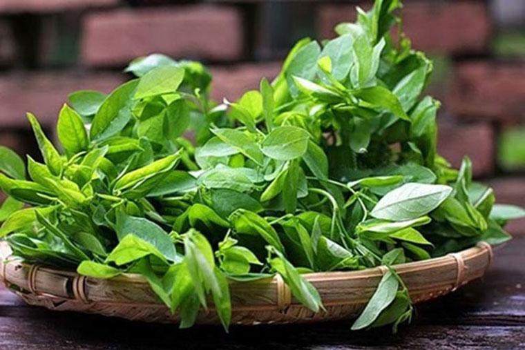 Rau ngót tính mát, vị ngọt, nhiều vitamin tốt cho chức năng sinh lý