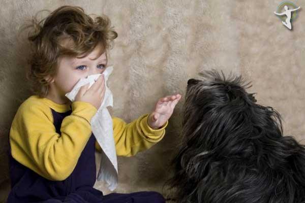 Hạn chế tiếp xúc với chó, mèo, động vật có lông