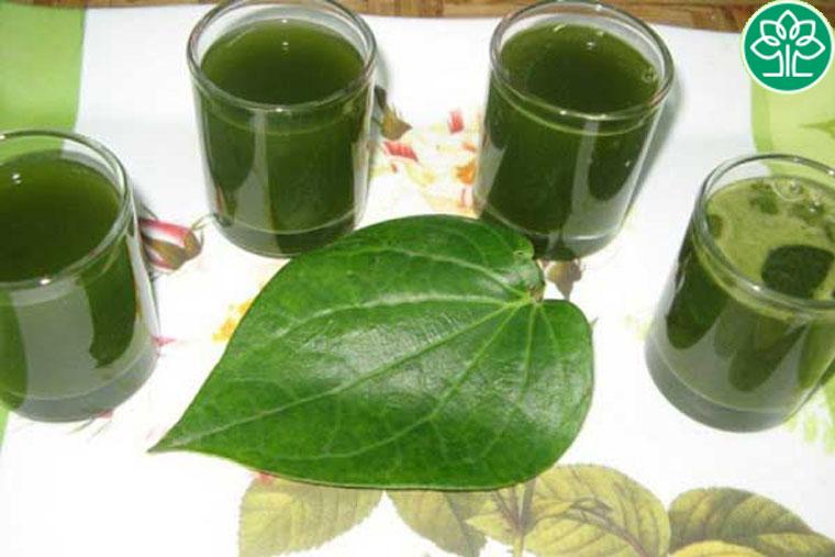 Dùng nước lá trầu không uống thay nước dùng hàng ngày để có kết quả tốt nhất
