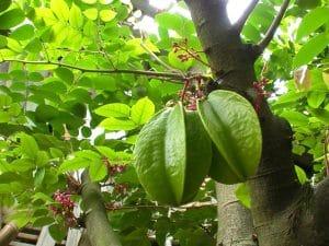 Loại thực vật quen thuộc và hữu ích trong việc chữa tổ đỉa tại nhà.
