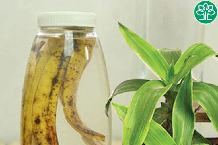 Cách chữa viêm amidan bằng cây lược vàng & dấm chuối