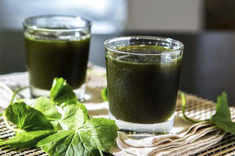 Uống nước ép rau má để trị bênh mề đay mẩn ngứa ở vùng kín