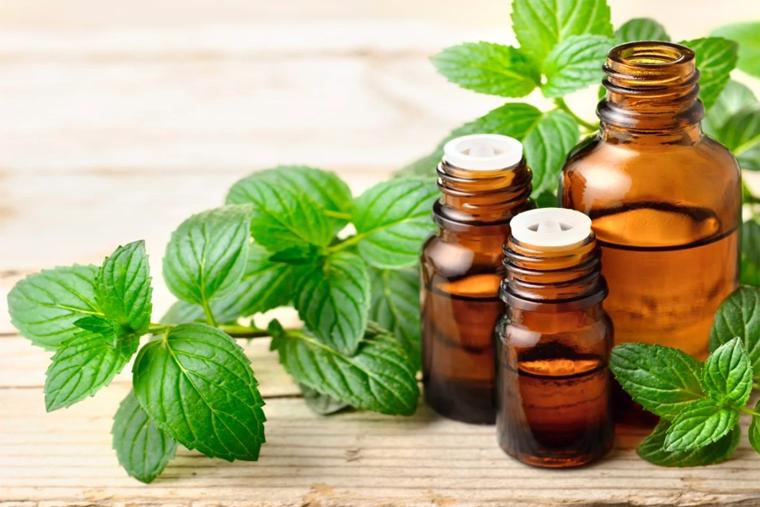 Cây bạc hà: Hướng dẫn chi tiết cách chữa bệnh qua 8 bài thuốc