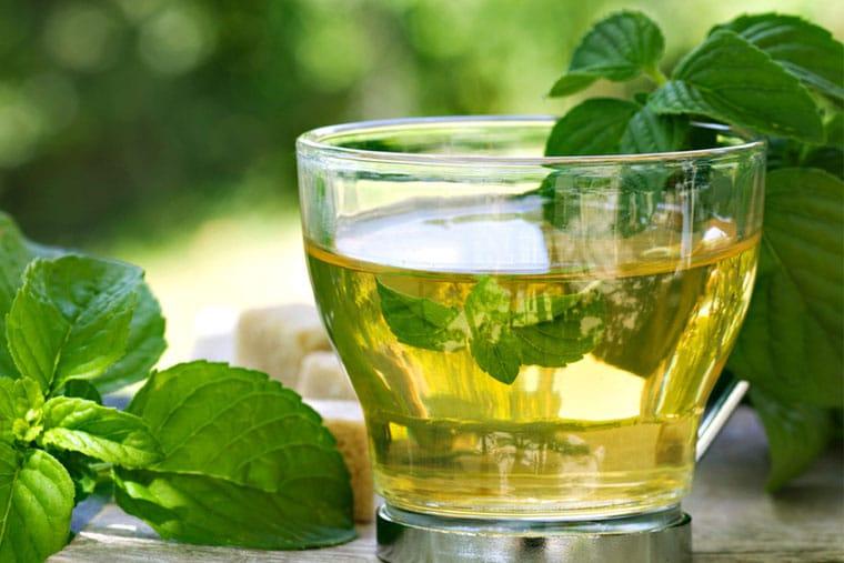Uống trà bạc hà mỗi sáng chữa đau rát họng hiệu quả